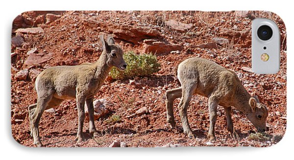 IPhone Case featuring the photograph Bighorn Canyon Sheep Wyoming by Janice Rae Pariza