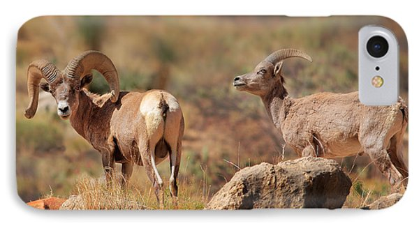 Bighorn Duo IPhone Case by Inge Johnsson