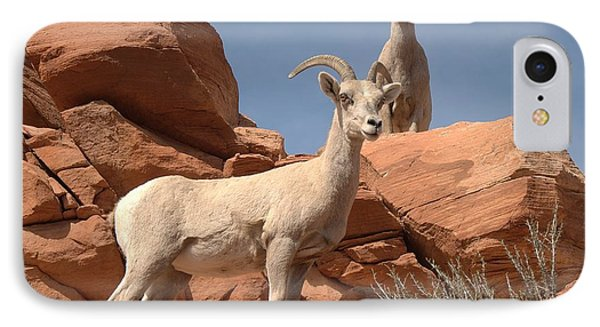 IPhone Case featuring the photograph Bighorn Ewes by Jeff Cook