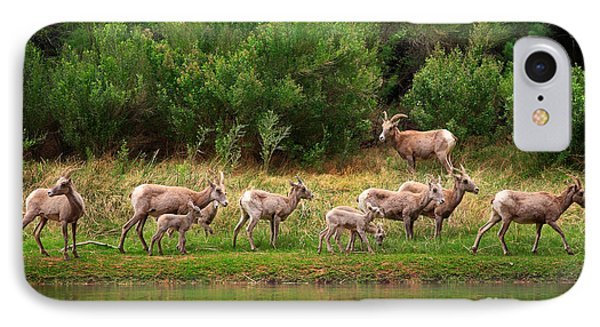 Bighorn Herd IPhone Case by Inge Johnsson