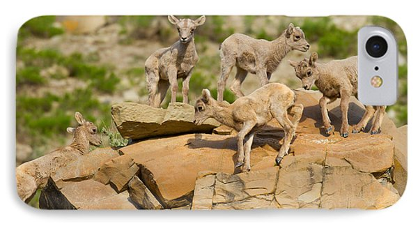 IPhone Case featuring the photograph Bighorn Playground by Aaron Whittemore