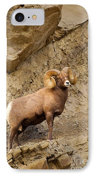 IPhone Case featuring the photograph Bighorn  by Aaron Whittemore