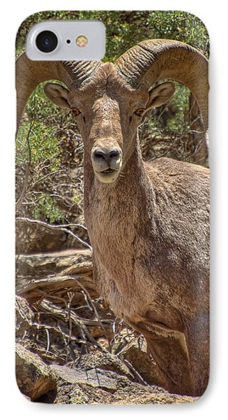 IPhone Case featuring the photograph Bighorn Ram by Britt Runyon