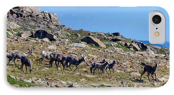 Bighorn Sheep Gang Female IPhone Case