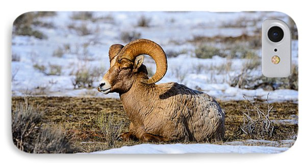 Bighorn Sheep IPhone Case by Greg Norrell