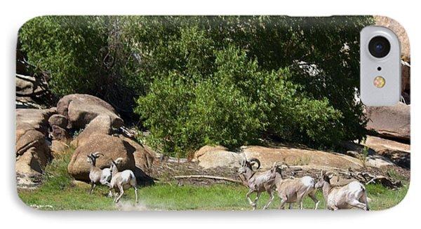 Bighorn Sheep In A Run IPhone Case by Renee Sinatra