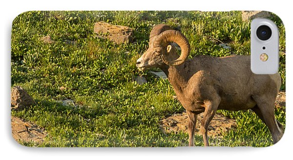 Bighorn Sheep Ram In Glacier 3 Phone Case by Natural Focal Point Photography