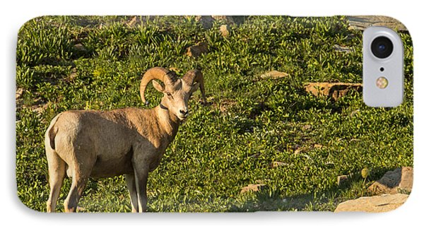 Bighorn Sheep Ram In Glacier 4 Phone Case by Natural Focal Point Photography