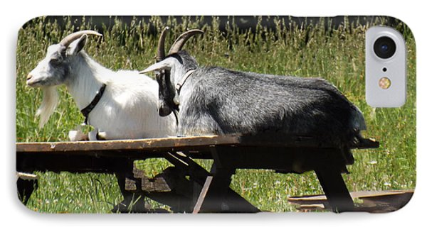 Billy Goats Picnic IPhone Case by Brenda Brown