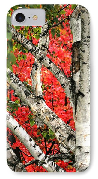 IPhone Case featuring the photograph Birch Eclipsing Maple by Doris Potter
