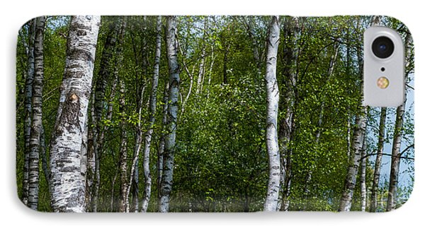 Birch Forest In The Summer Phone Case by Hannes Cmarits