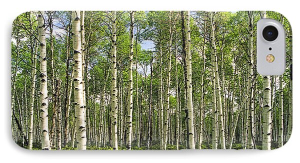 Birch Tree Grove In Summer Phone Case by Randall Nyhof