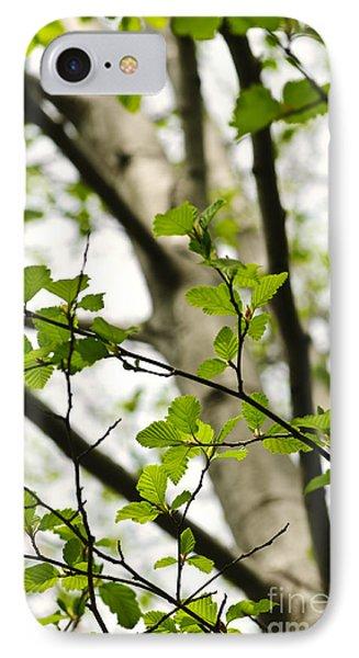 Birch Tree In Spring Phone Case by Elena Elisseeva