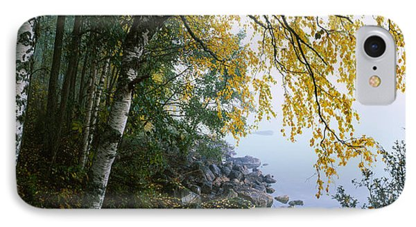 Birch Trees In A Forest, Puumala IPhone Case