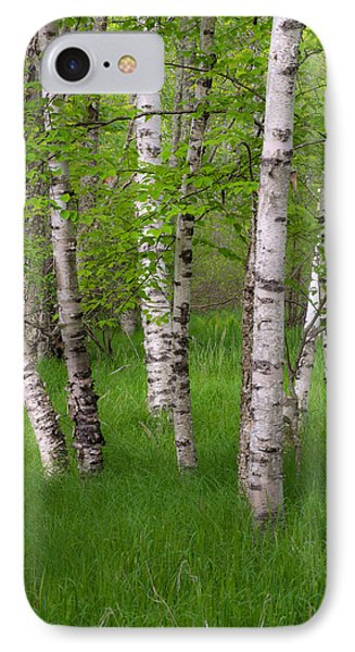 Birch Trees In The Great Meadow, Acadia IPhone Case by Panoramic Images