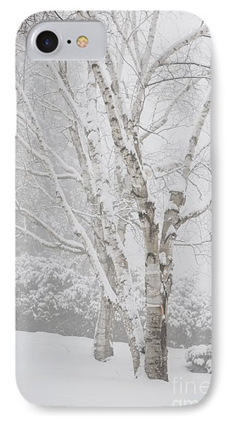 Birch Trees In Winter IPhone Case