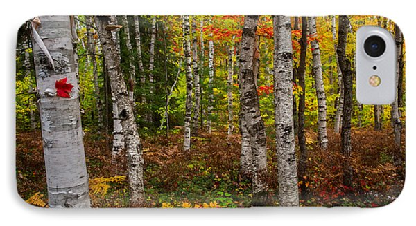 Birch Trees Phone Case by Todd Bielby