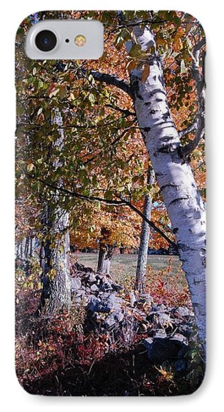 IPhone Case featuring the photograph Birches by Mim White