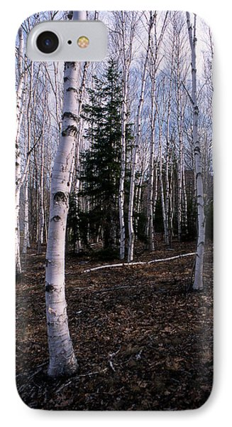 Birches IPhone Case by Skip Willits