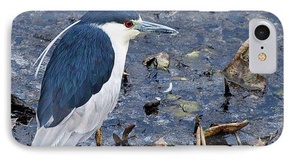 Bird - Black Crowned Night Heron Phone Case by Paul Ward