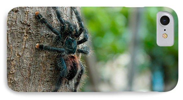 Bird-eater Tarantula / Tarantula Comedora De Aves Phone Case by Daniel Castillo