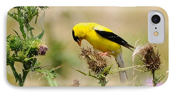 Bird -gold Finch Feasting  Phone Case by Paul Ward