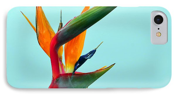 Bird Of Paradise Against Aqua Sky IPhone Case by Debra Thompson
