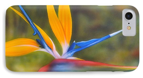 Bird Of Paradise IPhone Case by Darren Robinson