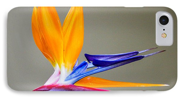 Bird Of Paradise Flower IPhone Case by Photographic Art by Russel Ray Photos
