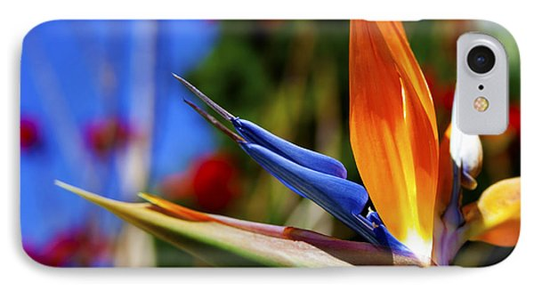 IPhone Case featuring the photograph Bird Of Paradise Open For All To See by Jerry Cowart