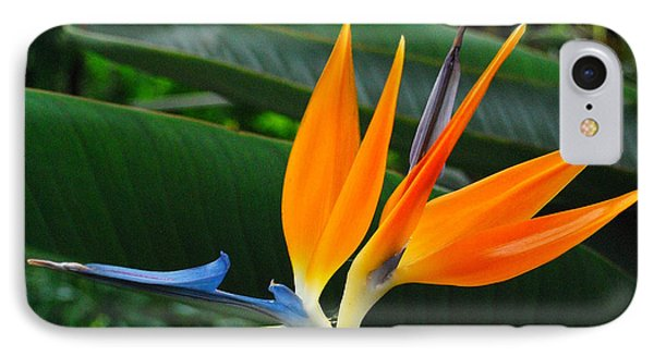 IPhone Case featuring the photograph Bird Of Paradise  by JRP Photography
