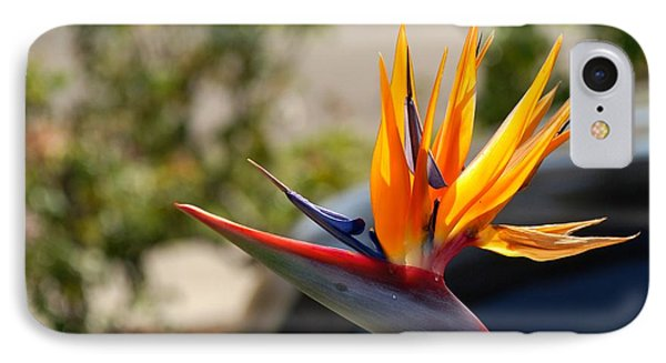 Bird Of Paradise Phone Case by Leo Sopicki
