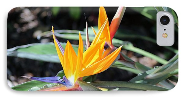 Bird Of Paradise IPhone Case by Nance Larson