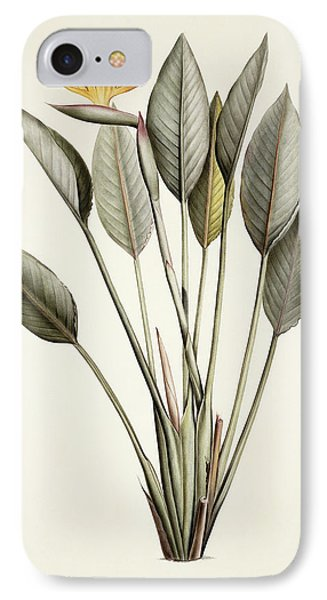 Bird Of Paradise IPhone Case by Pierre Joseph Redoute