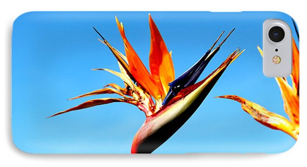 Bird Of Paradise IPhone Case by Shawn MacMeekin
