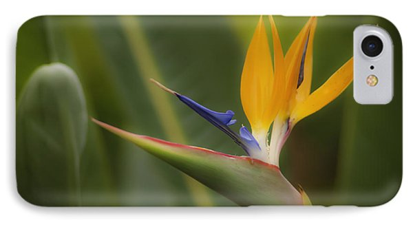 Bird Of Paradise IPhone Case by Sherri Meyer
