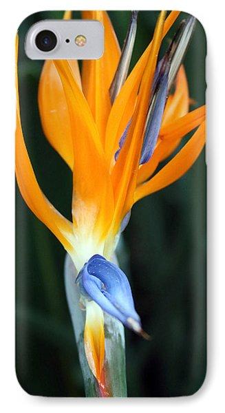 Bird Of Paradise Study 1 IPhone Case by Mary Haber