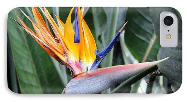 Bird Of Paradise Study 4 IPhone Case by Mary Haber