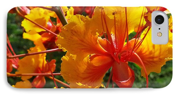 IPhone Case featuring the photograph Bird Of Paradise by Suzanne Silvir