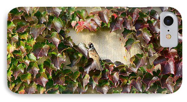 Bird On Wall Of Leafs IPhone Case