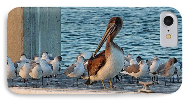 Birds - Among Friends IPhone Case by HH Photography of Florida