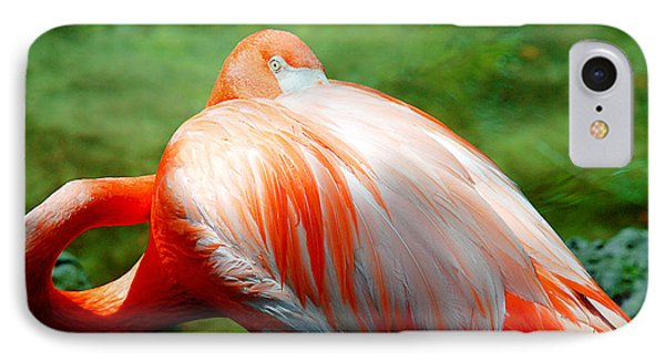 Bird's Eye View IPhone Case by Beverly Stapleton