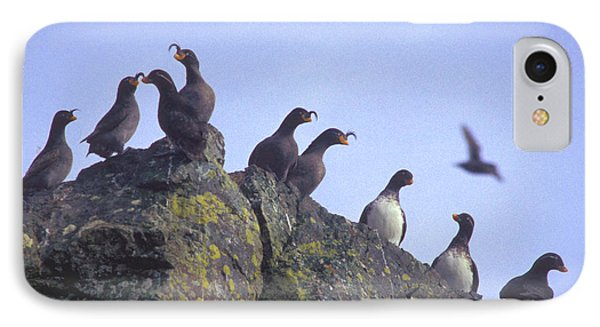 Birds On Rock IPhone Case by F Hughes