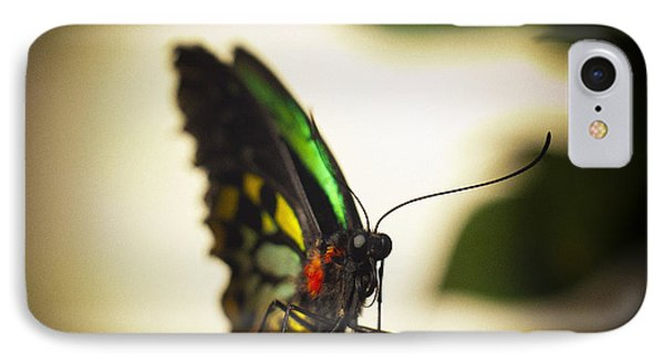 Birdwing Butterfly IPhone Case by Bradley R Youngberg