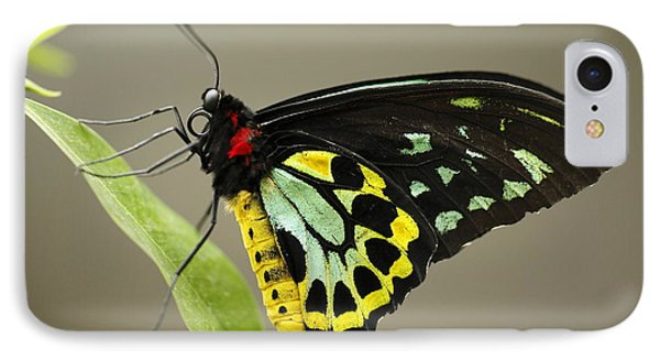 Birdwing Butterfly IPhone Case by Craig Dingle