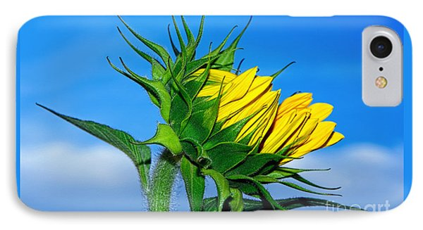 Birth Of A Sunflower By Kaye Menner IPhone Case