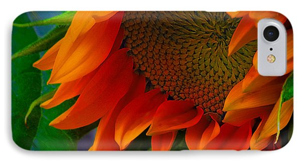 Birth Of A Sunflower IPhone Case by John  Kolenberg