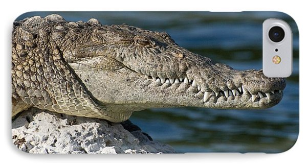 IPhone Case featuring the photograph Biscayne National Park Florida American Crocodile by Paul Fearn