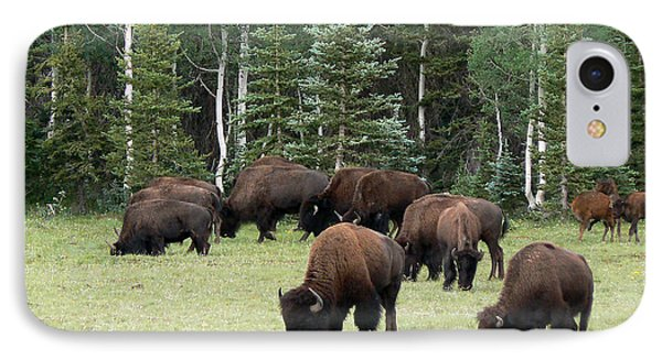 Bison At North Rim IPhone Case by Laurel Powell