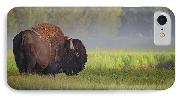 Bison In Morning Light IPhone 7 Case